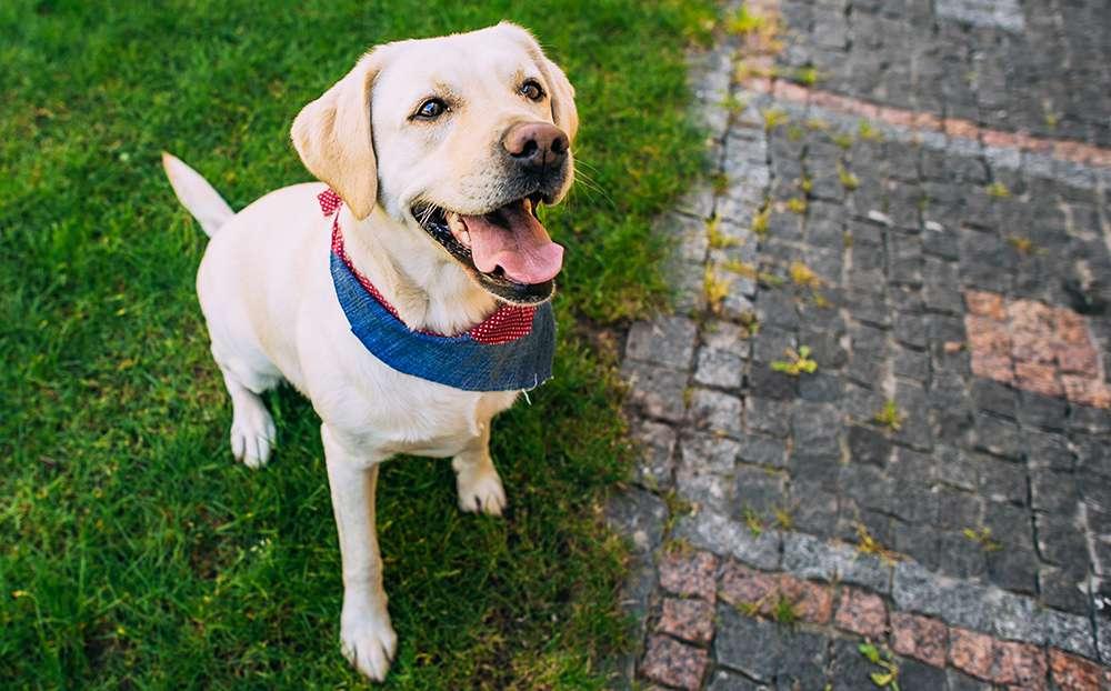 Dog Clicker Training Pippa