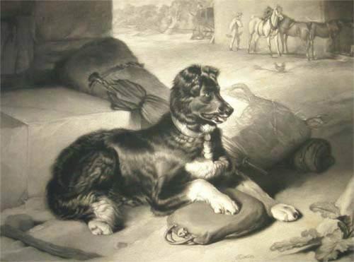 cora-the-labrador