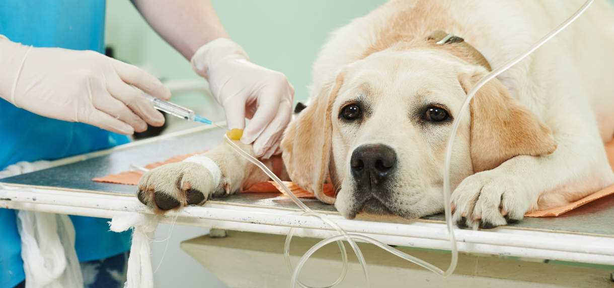 Can You Get Giardia From Your Dog