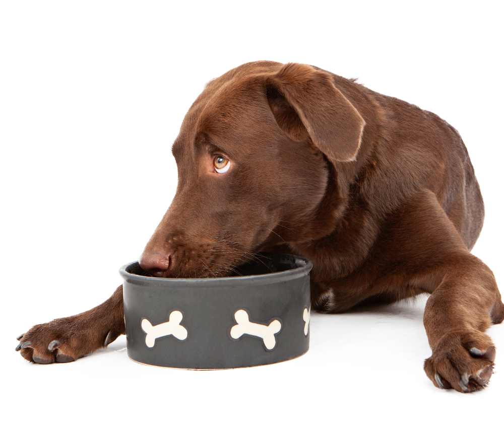 Dog Guarding Food But Not Eating