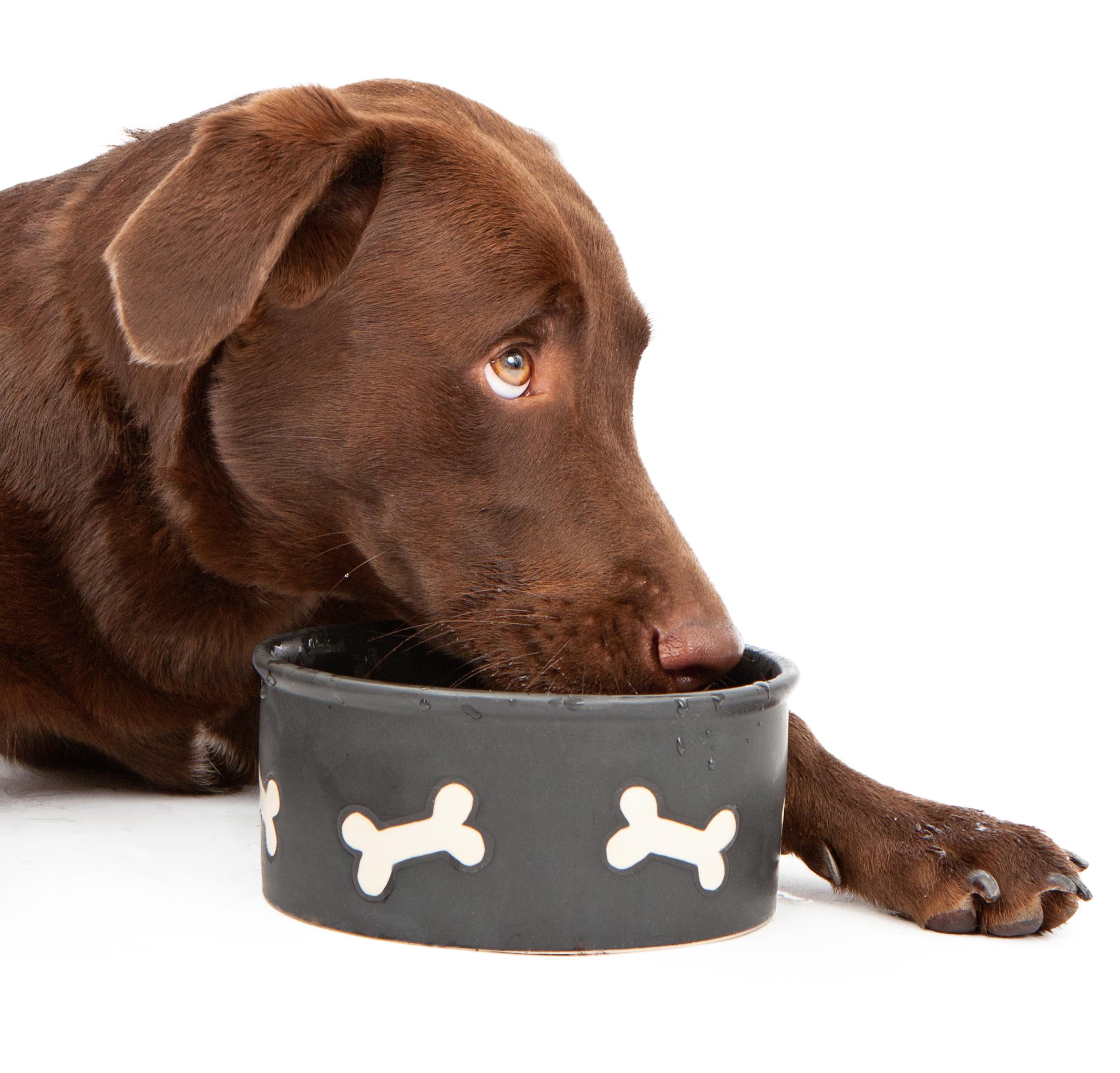Dog Food Warnings