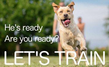 let's train our labradors