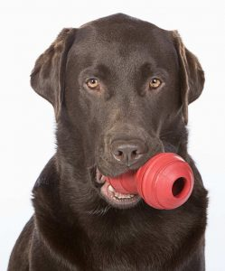 labrador training methods use toys and food