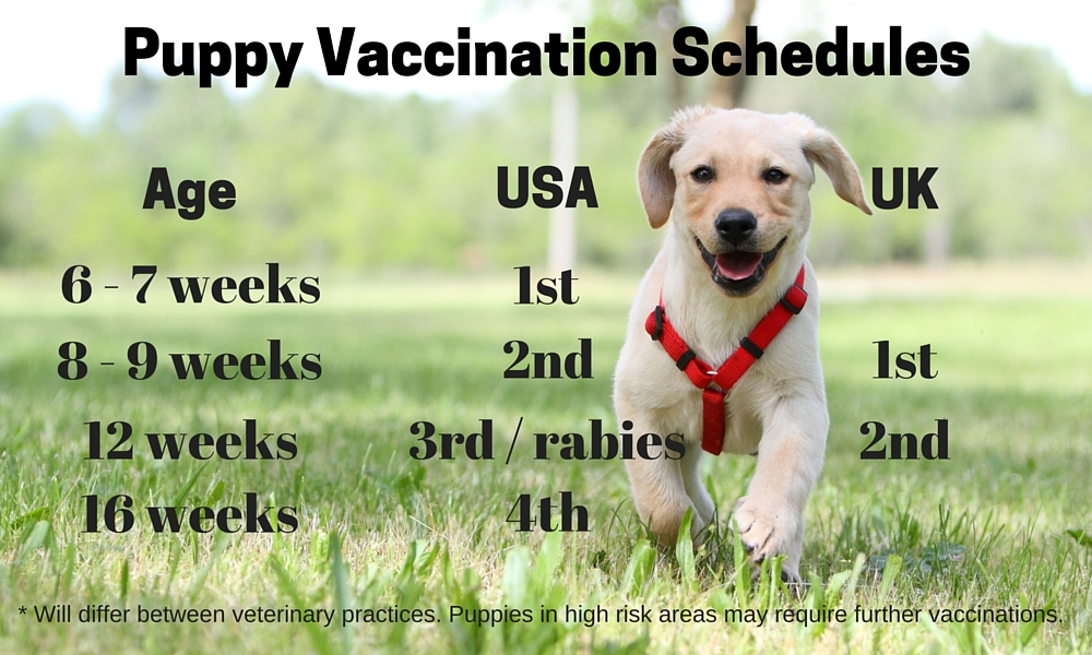 Puppy Vaccination Frequently Asked Questions And Schedules