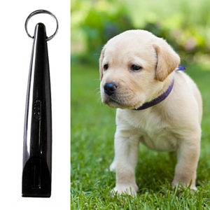 Puppy training tips labradors