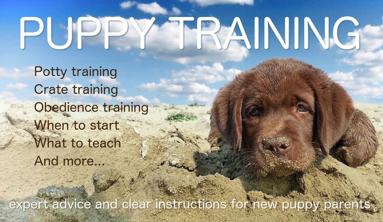 Labrador Puppy Training The Labrador Site