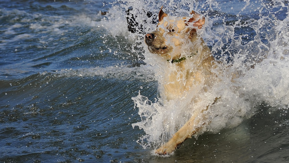 how-to-teach-a-dog-to-swim