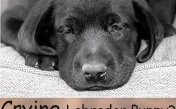 How to keep crying to a minimum, and help your puppy settle in happily
