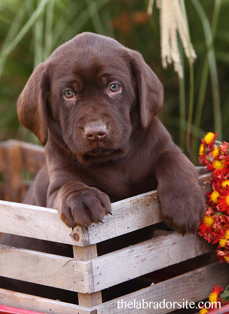Your six week old puppy questions answered here