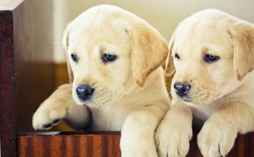 Can puppies leave their mother at six weeks? We investigate