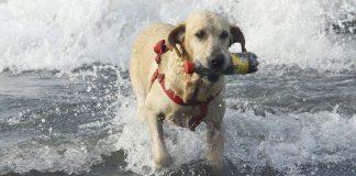 Dog training leads - how to use a long dog leash