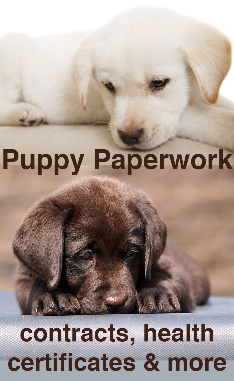 What is a change of ownership paper for a puppy?