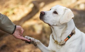 should you send your dog away for training