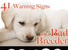 bad dog breeder