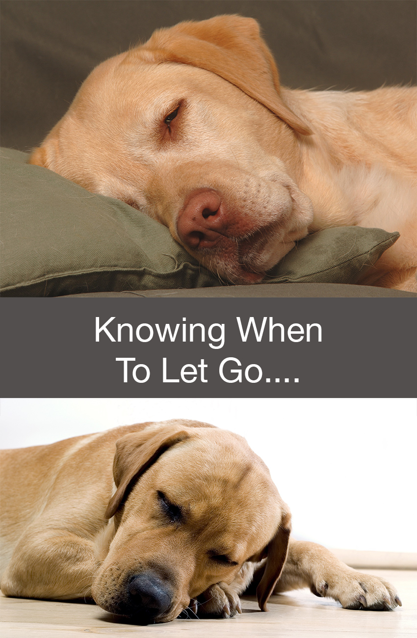 Knowing When To Let Go Of Your Labrador