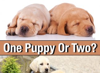 One puppy or two, the pros and cons of littermates