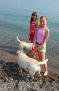 How to play with a labrador, safety rules for children and adults