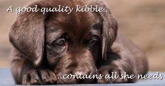 Feeding Labrador Puppy on kibble