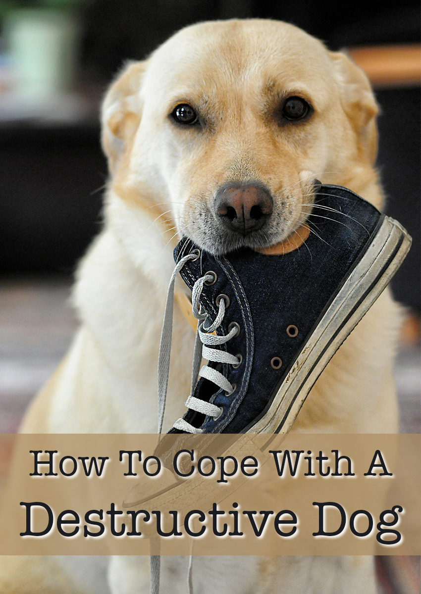 Find out how to cope with a destructive dog - tips and help
