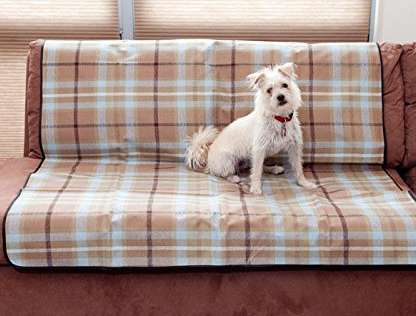 protect furniture from in season dog