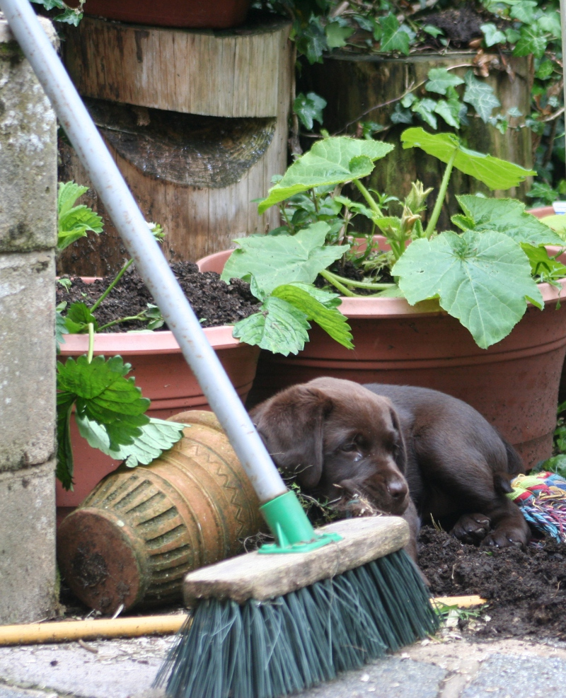 Puppy Destroying Garden