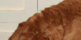 Labrador Treat Dispenser
