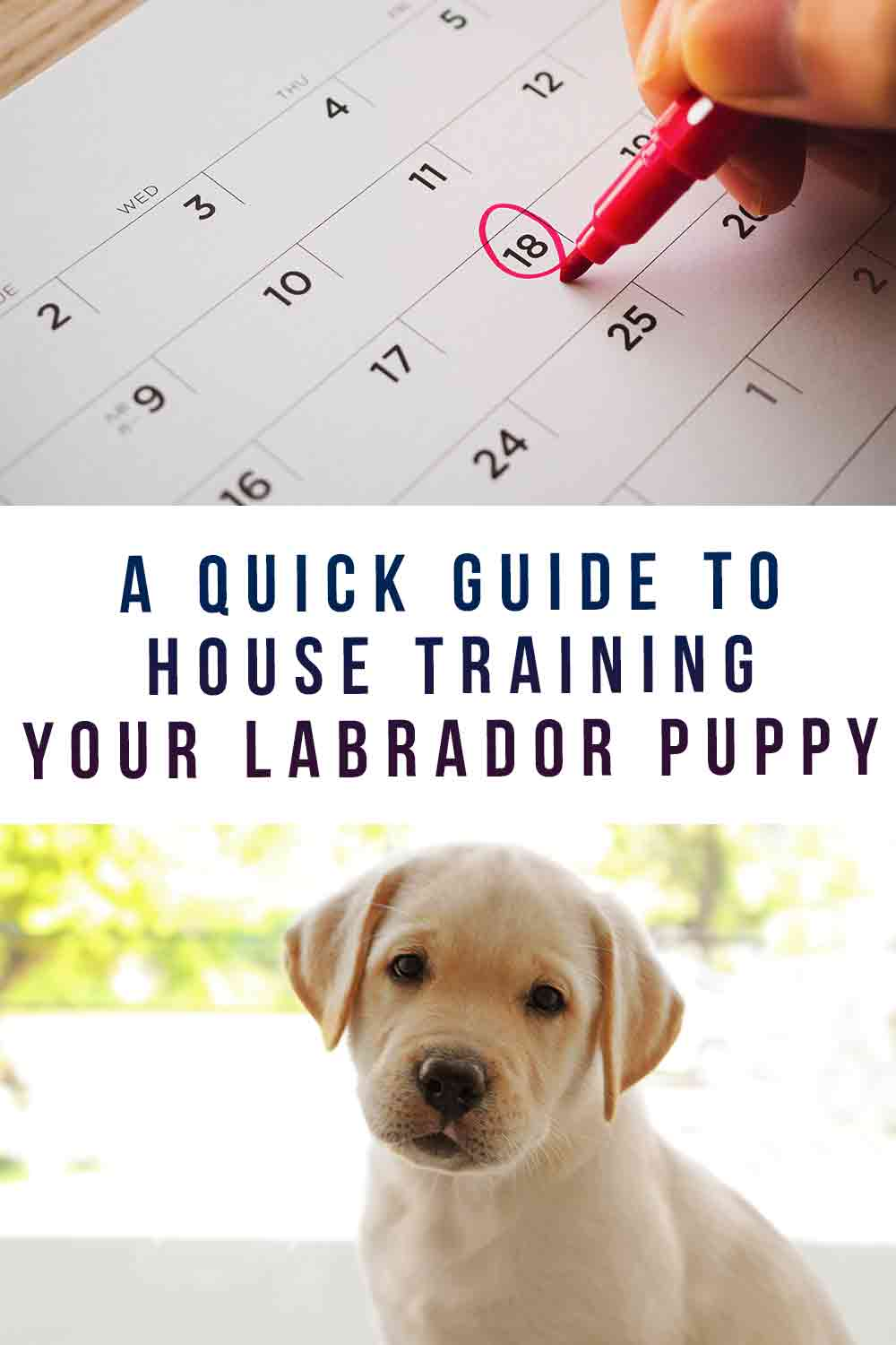 A Quick Guide to House Training Your Labrador Puppy
