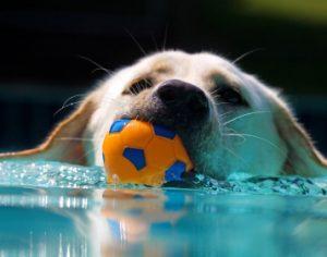How do I teach my dog to fetch