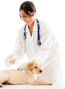 How Often Does A Dog Need Vaccinations Uk