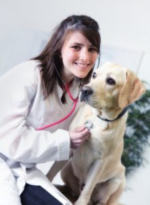 should you microchip your Labrador