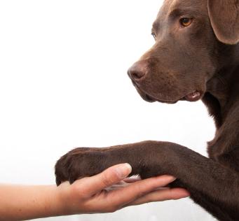 Clipping Dog S Nails Dog Hates