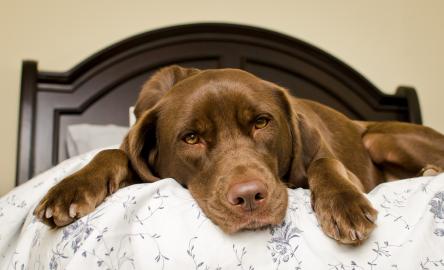 How Long Do Dogs Sleep - Is Your Dog Sleeping Too Much?