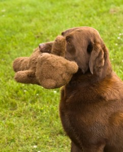 soft-toys-for-labradors