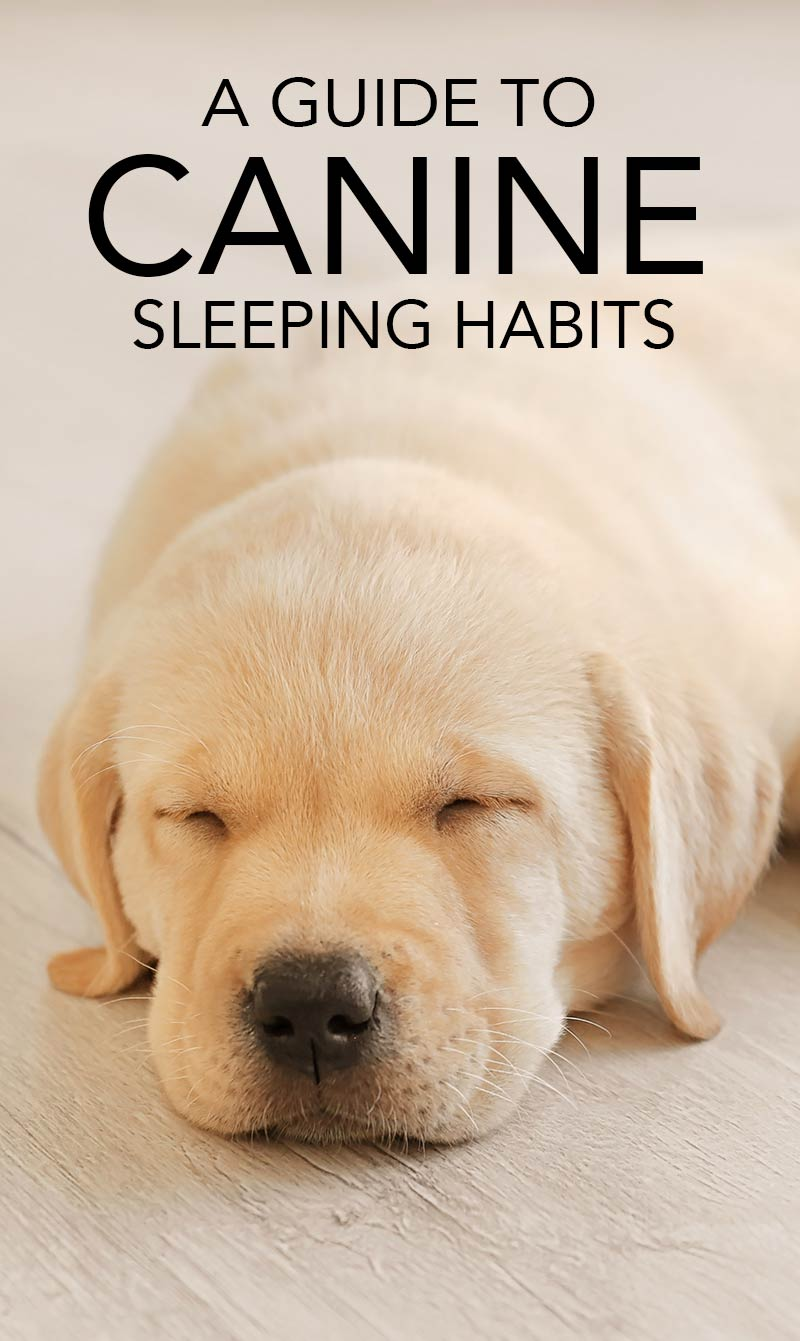 How long to dogs sleep? Find out in this guide to canine sleeping habits