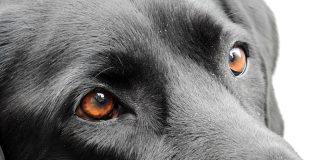 dog vision explained