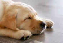 how long do dogs sleep
