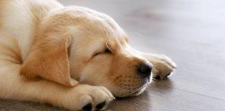 how long do dogs sleep