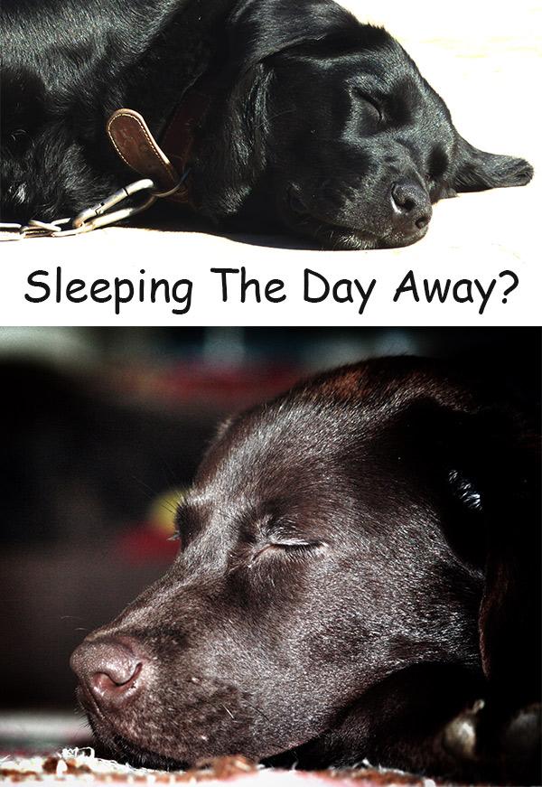 Do Flies Sleep? Where Do Flies Go At Night?