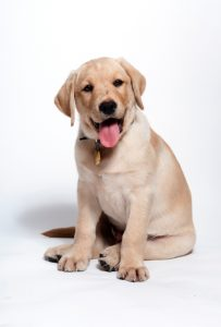 10-tips-for-happy-puppy