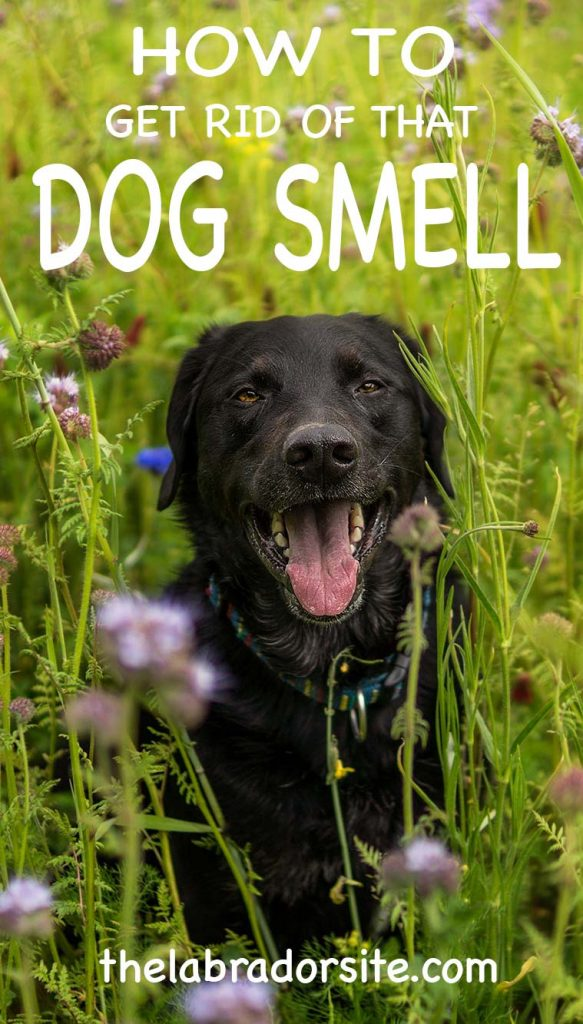 Get Rid Of The Smell Of Dog In My Room