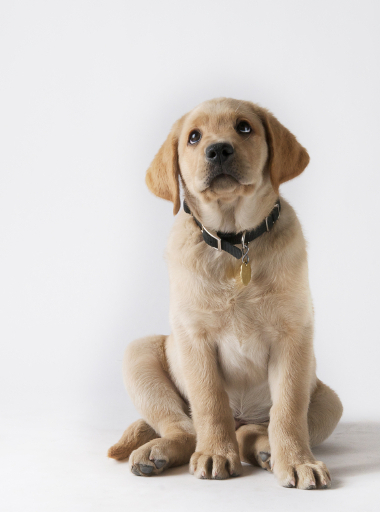 advice on raising a puppy when you work full time