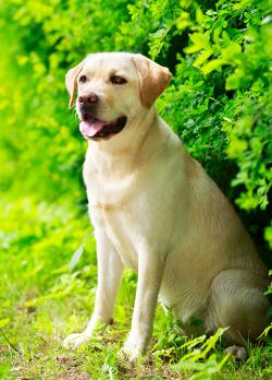 Happy-Puppy-jacket-image1-195x300