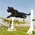 50 teach jump