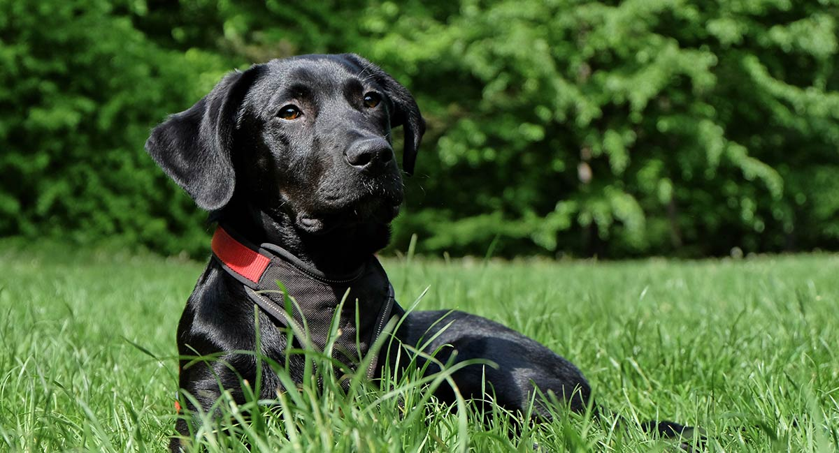 """In """"Why Do Dogs Eat Their Poop"""" we look at which dogs are more likely to become poop eaters and why"""