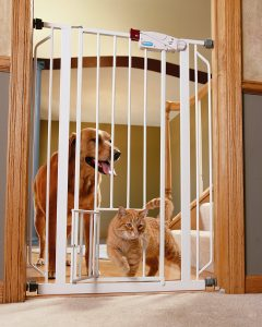 dog and cat with baby gate