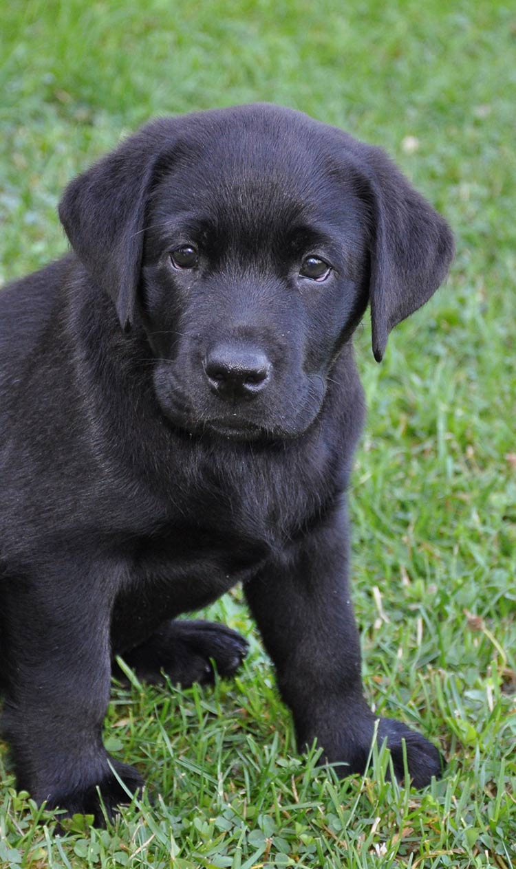 Is your puppy eating poop - we can help
