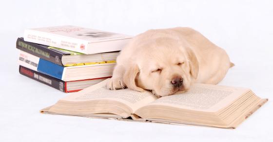 dog-books-christmasFB
