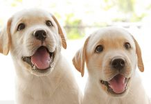 When do dogs stop growing and other puppy growth FAQ