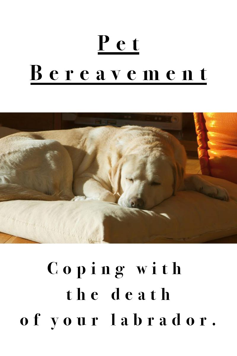 Pet Bereavement - Coping with  the death of your Labrador.