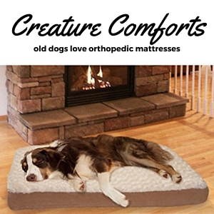 Mattress for arthritic dogs